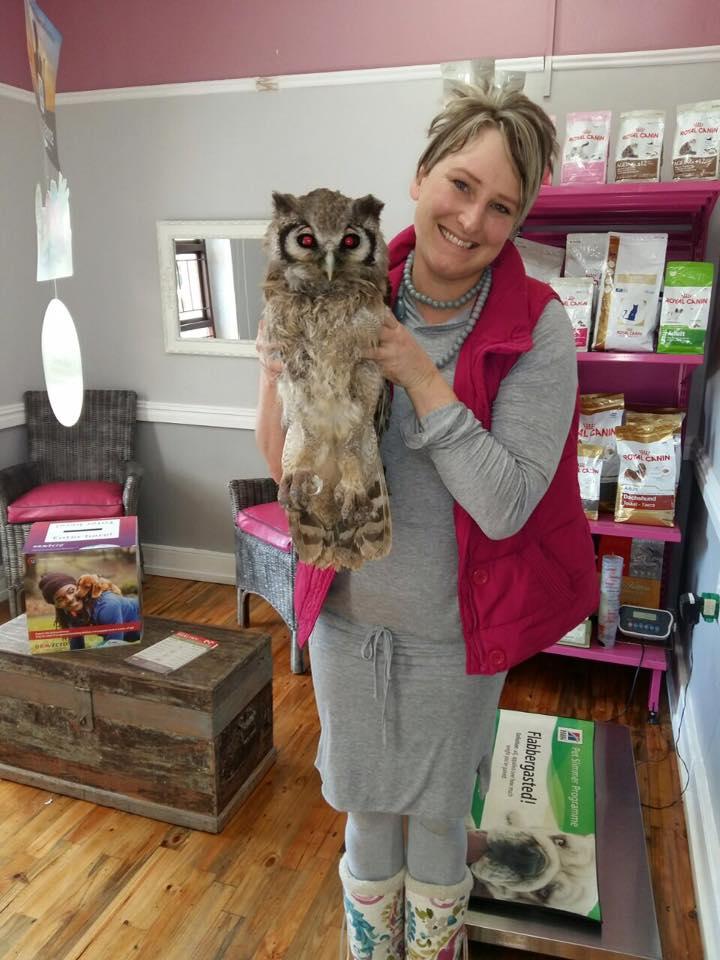 animal vetcare pet owl
