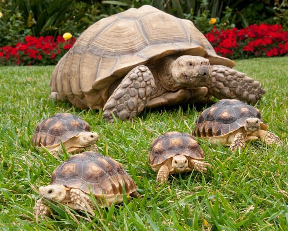animal vetcare tortoise exotic