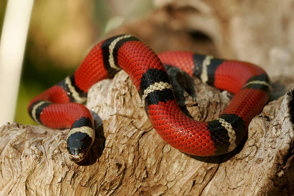 animal vetcare snake exotic
