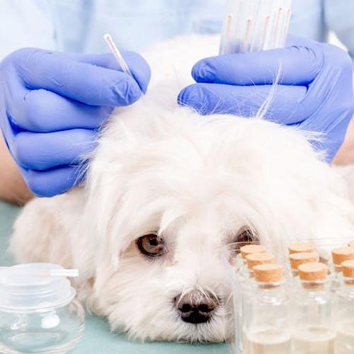 animal vetcare acupuncture