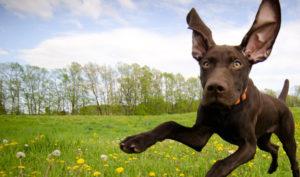animal vet dog
