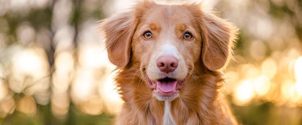 animal vetcare dog dental care