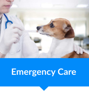 animal vetcare emergency care pet