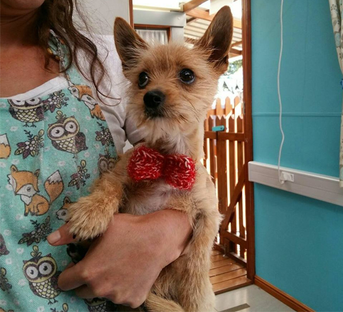 animal vetcare pet dog grooming