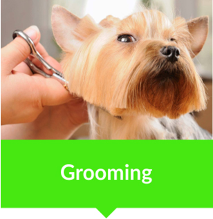 animal vetcare grooming hair cut pet