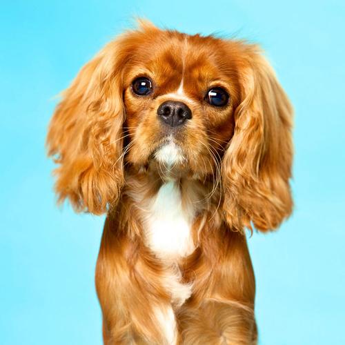 animal vetcare dog microchip