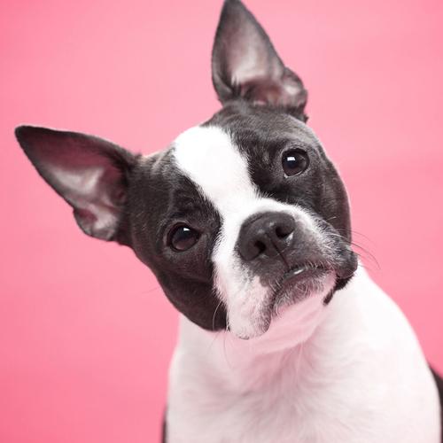 animal vetcare pet micro chipping