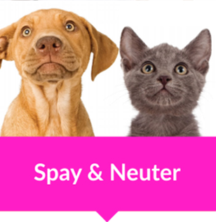 animal vetcare spay neuter cat dog