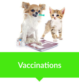 animal vetcare vaccinations