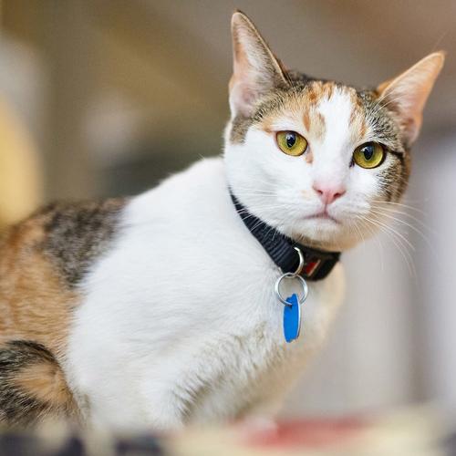 animal vetcare cat checkups