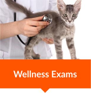 animal vetcare wellness exams pet care