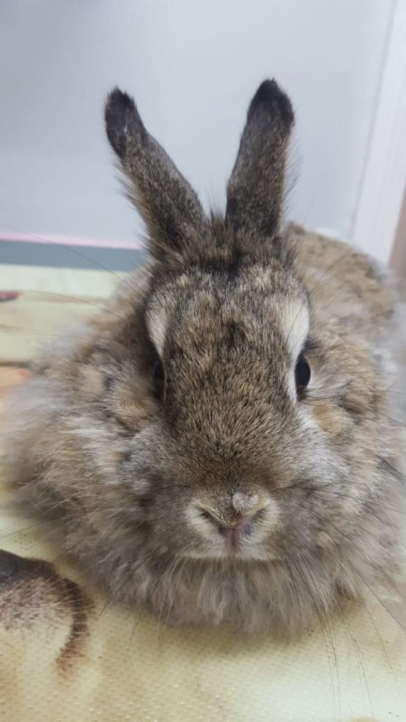 animal vetcare bunny exotic